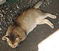 猫のタイタン